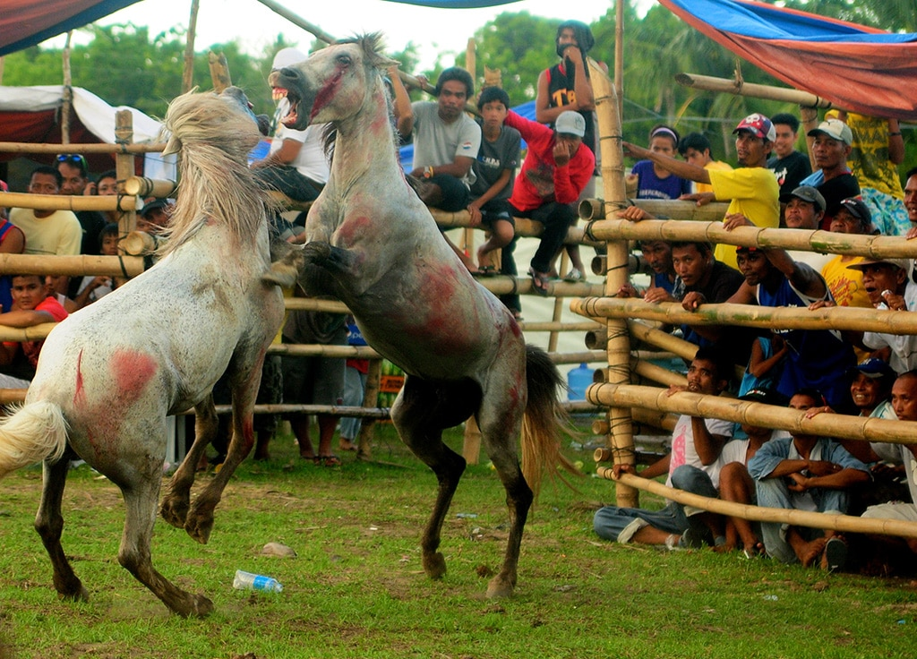 This horse fighting raid came to a totally unexpected conclusion! 2
