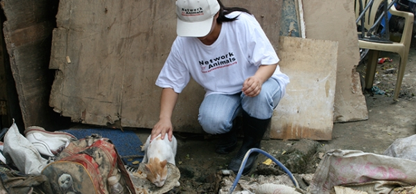 Disaster Relief for animal victims of Philippines hurricane 10