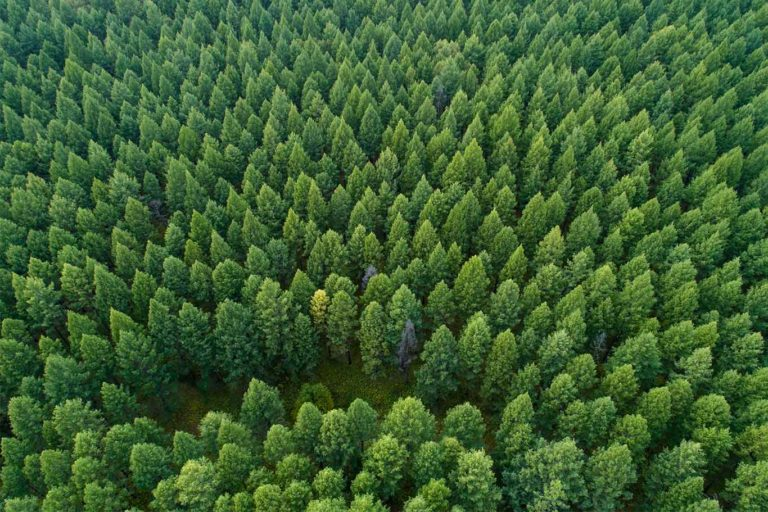China's Increasing Leafiness Is Helping Its Efforts To Reduce Its Carbon Footprint