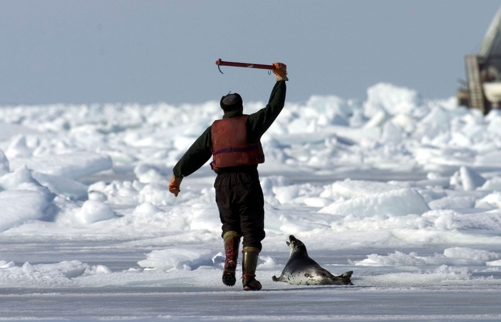 Evidence Lacking for Canada's Seal Hunt 3