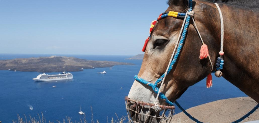 Facing terrible danger, NFA team keeps fighting for Santorini donkeys 4