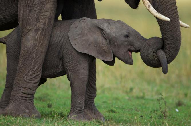 China Ivory Ban 6
