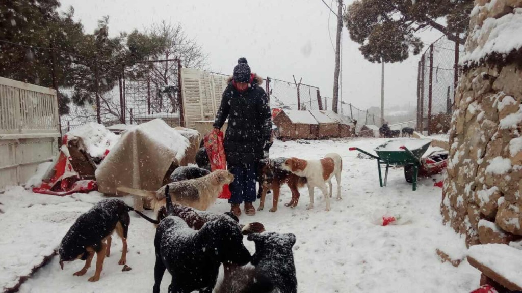 Snow cuts off shelter dogs. Dubrovnik to get a new mayor. 6