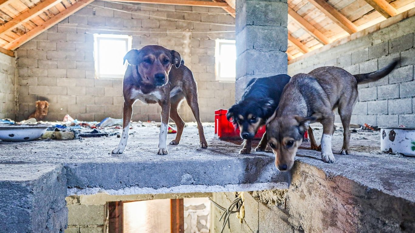 Shelter owner's DYING WISH is for the 140 street dogs she cares to be allowed to live! 1