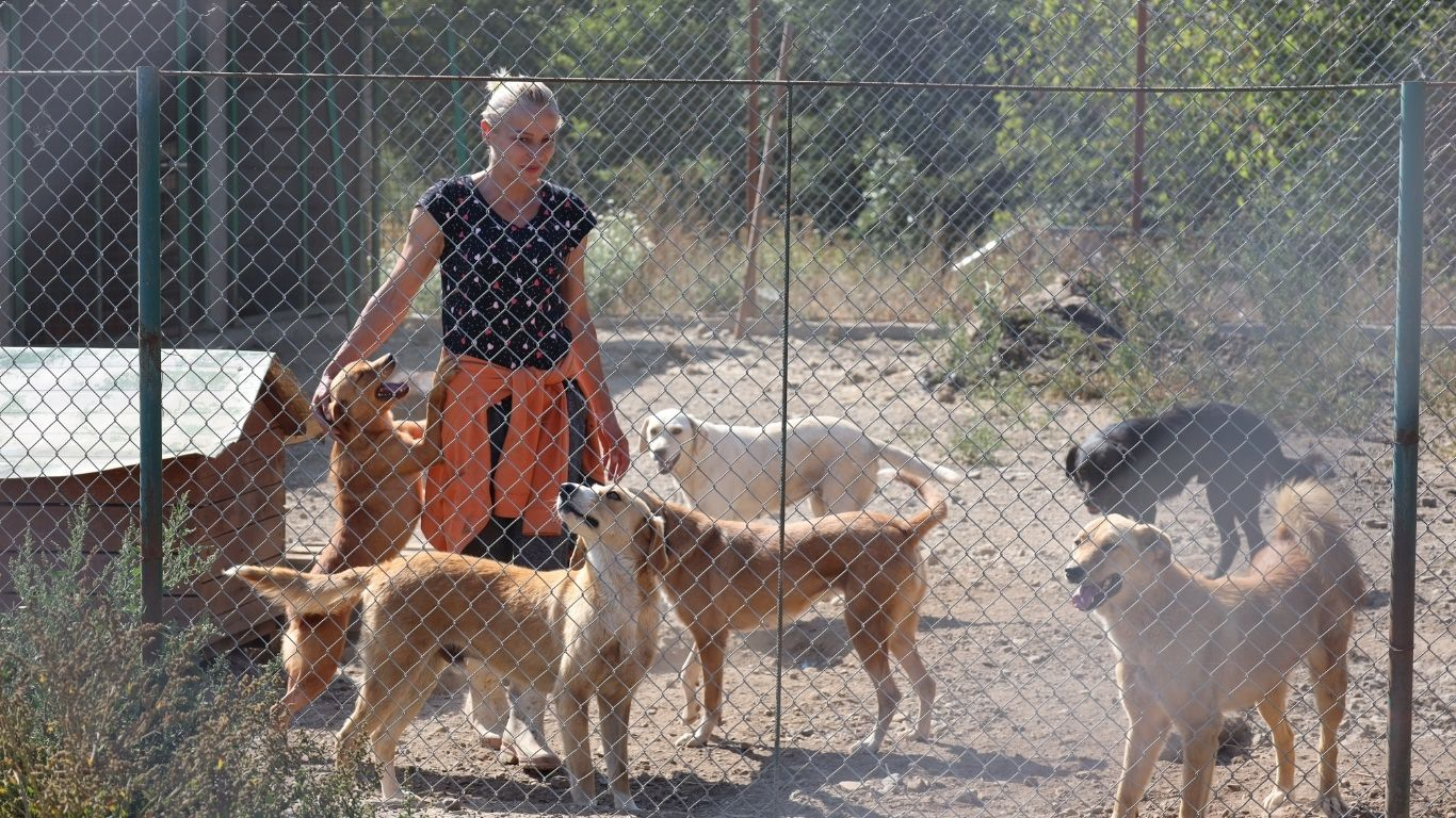Shelter owner's DYING WISH is for the 140 street dogs she cares to be allowed to live! 3