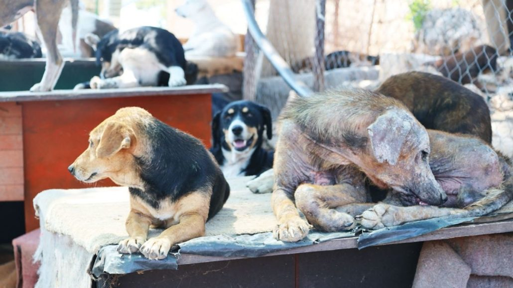 Broken promises and OUTRIGHT LIES leave street dogs in PERIL! 1
