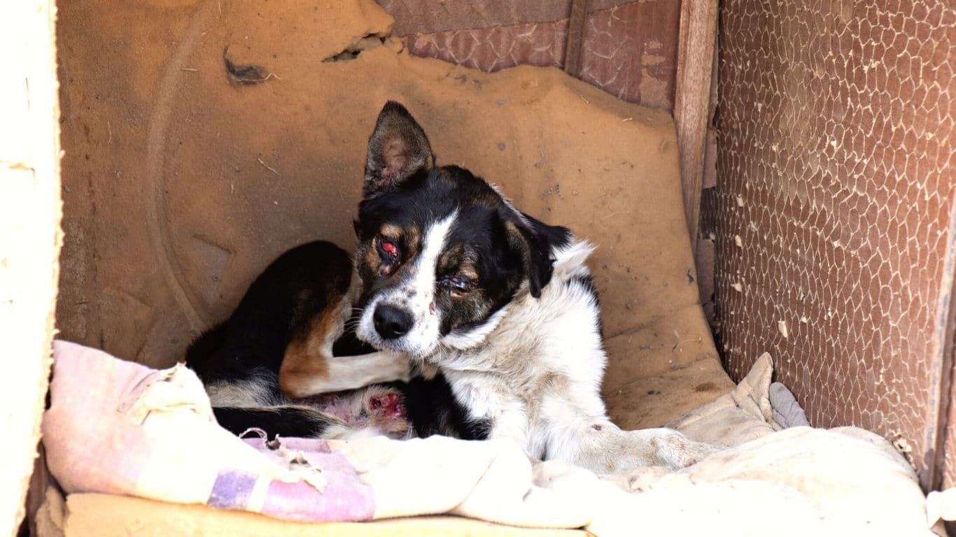 For these dogs, the suffering doesn't stop at hunger… 2