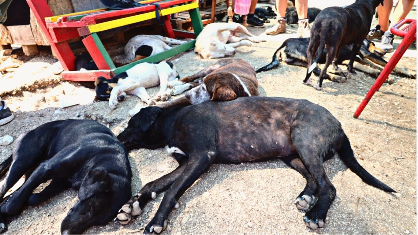 One woman at a decrepit shelter is caring, all alone, for street dogs SIX YEARS after city promised a shelter! 2