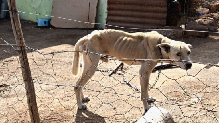 For these dogs, the suffering doesn't stop at hunger… 1