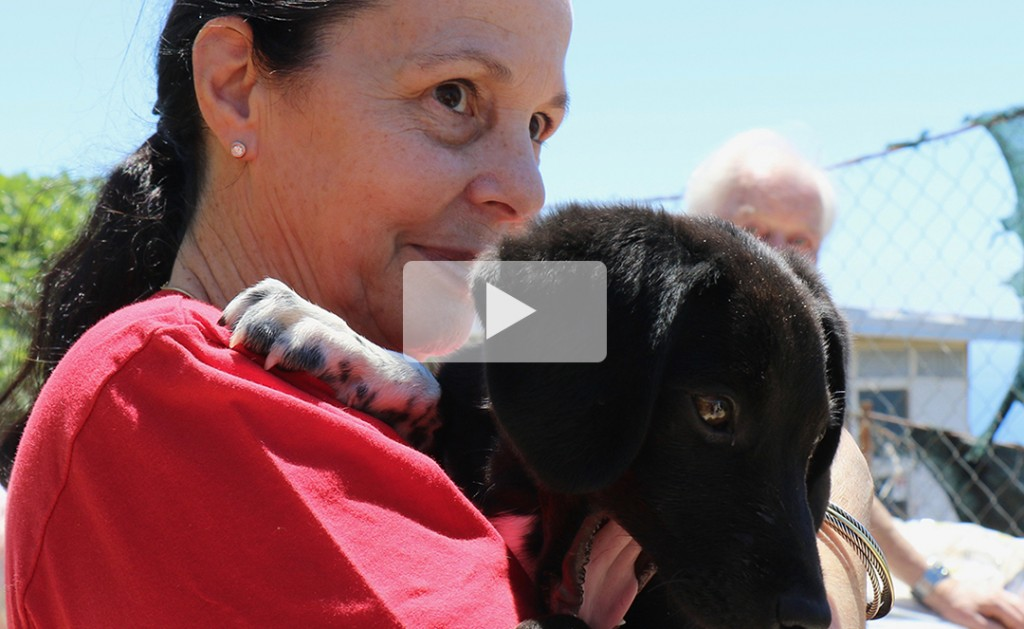 Dogs of Dubrovnik – we are winning, but really need your help! 10