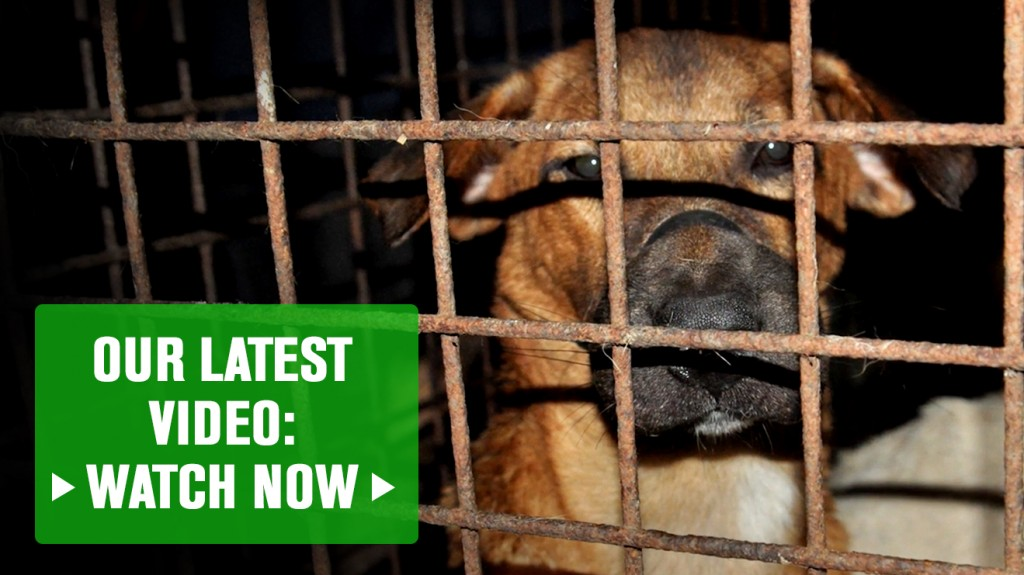 Help us fight the Philippine Dog Meat Trade 2