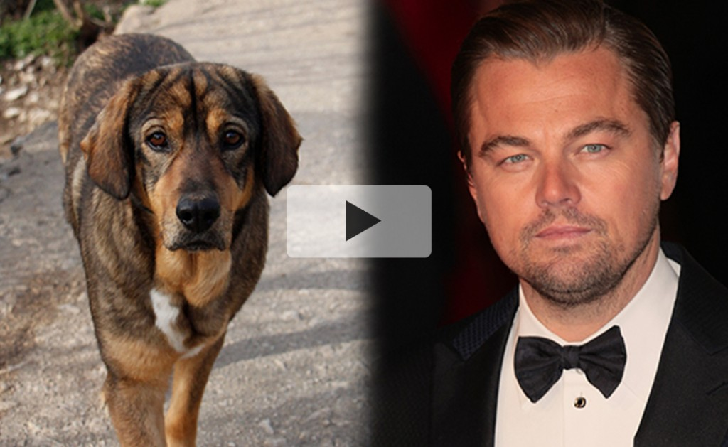 Leonardo DiCaprio: PLEASE HELP the street dogs of Dubrovnik! 13