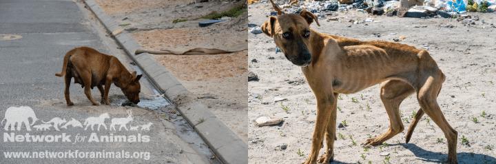 Worldwide dog food crisis