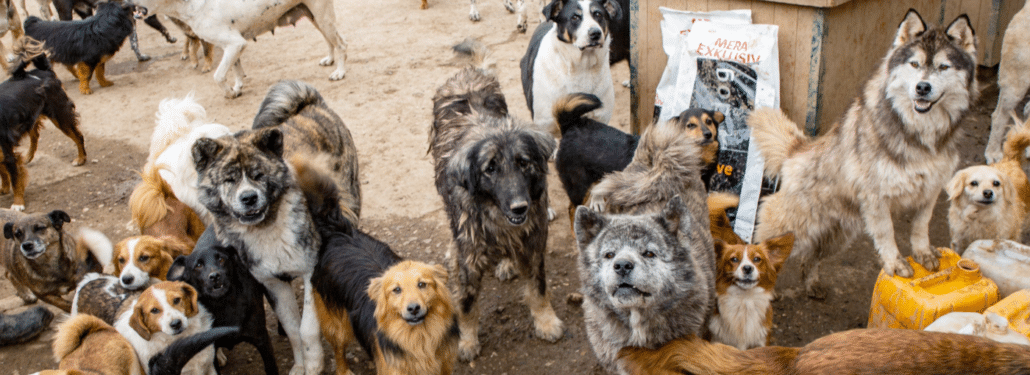 Worldwide dog food crisis
