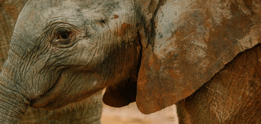 Zimbabwe baby elephants smuggled to Pakistani zoo 1