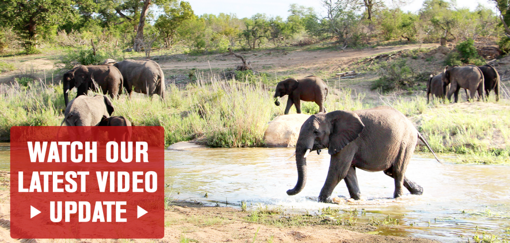 Be part of a plan to make elephants safe in the wild 1