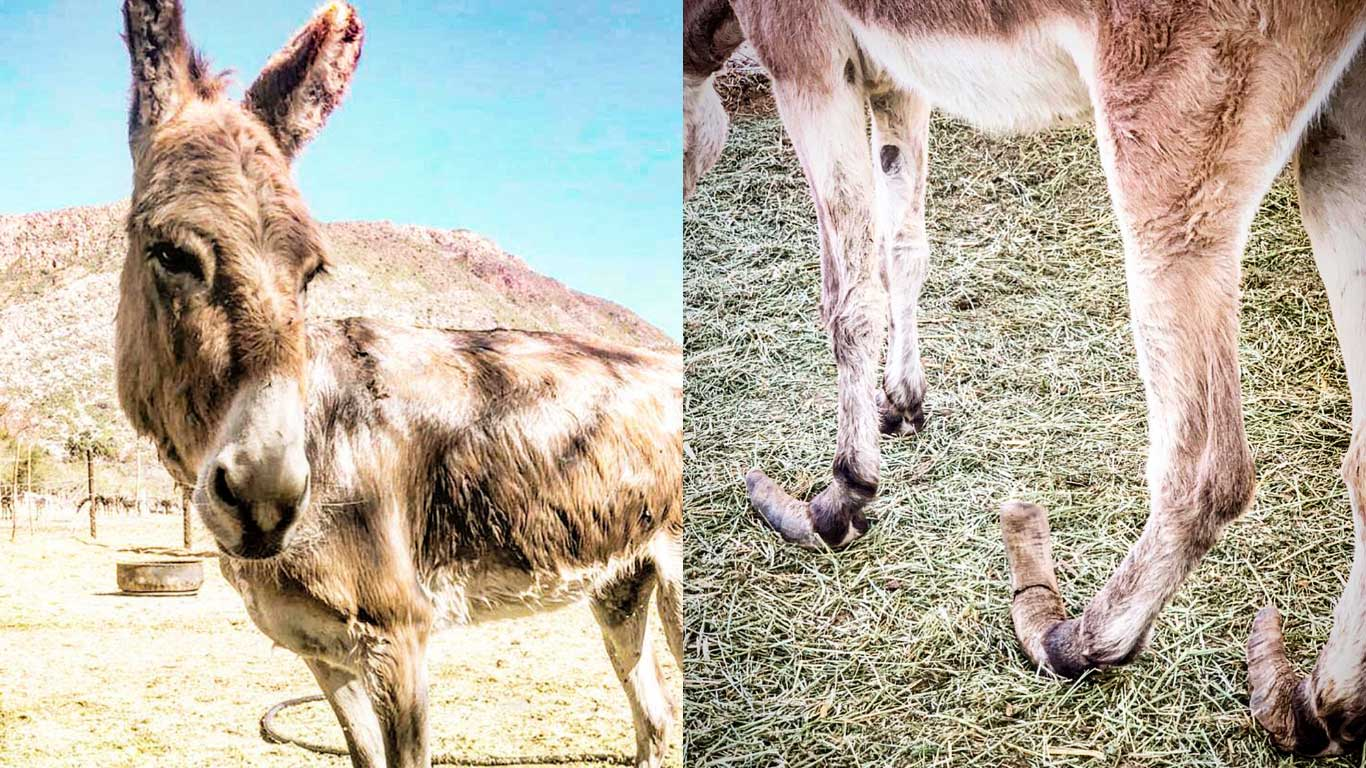 It's DESPICABLE! Pregnant mares and young foals are being butchered! 2