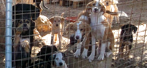 Supporting the Dogs of Greece 11