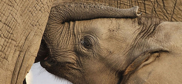 34 Baby Elephants Trapped in Zimbabwe 3