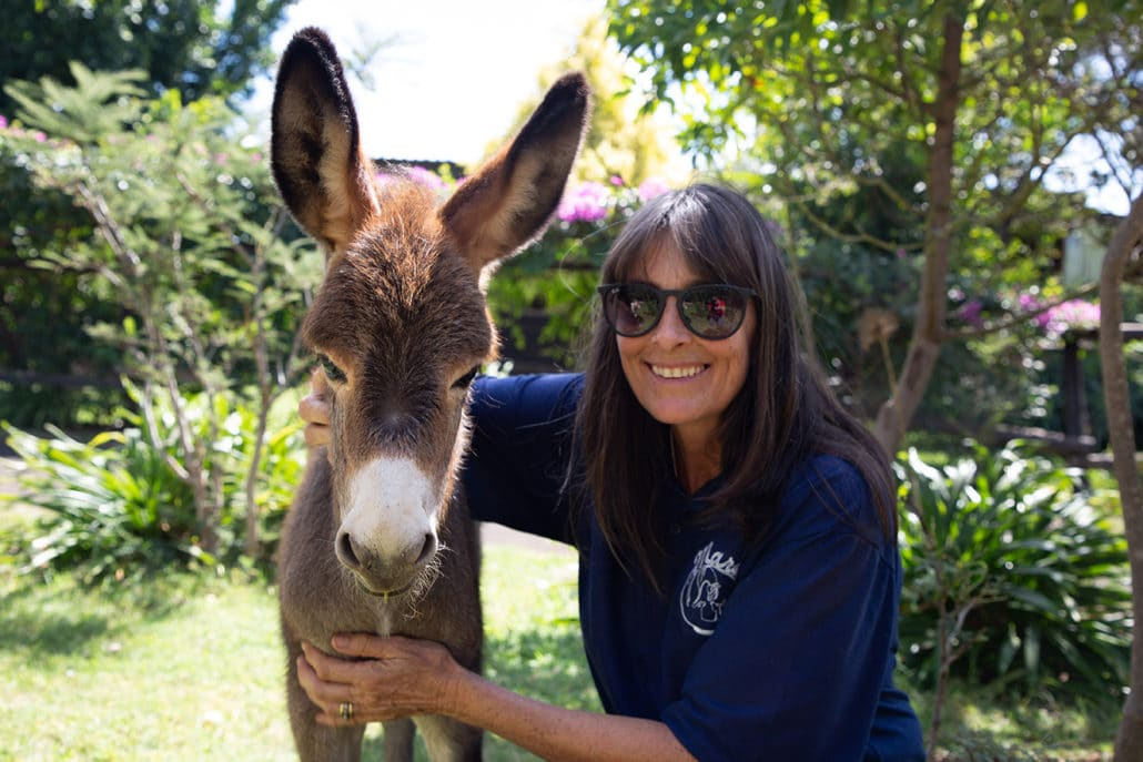 BRIAN DAVIES AWARD 2020: And the winner is…. MARES donkey sanctuary in Zimbabwe! 1