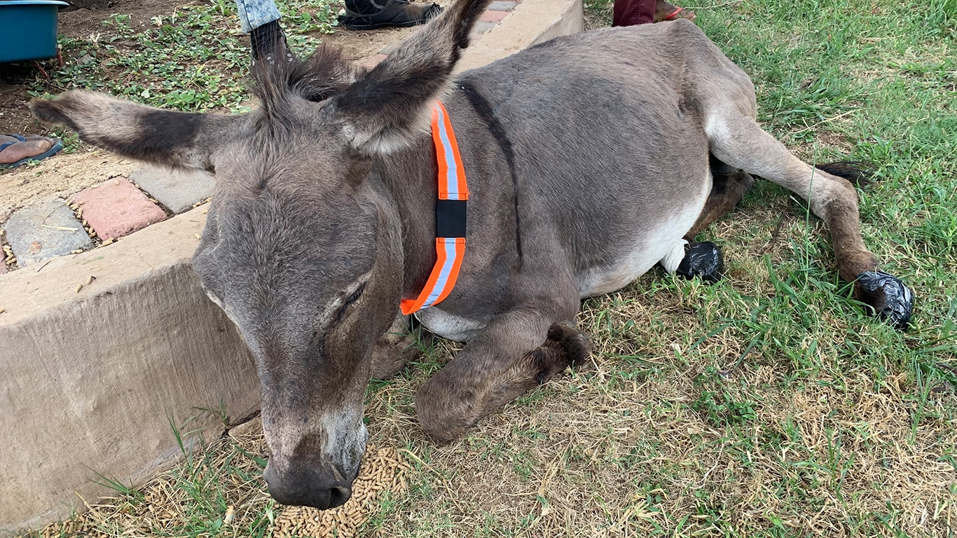 Maimed and emaciated donkeys need your help! 2