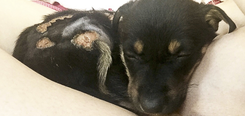 Monsters tried to kill tiny puppies by dousing them with boiling water! 7