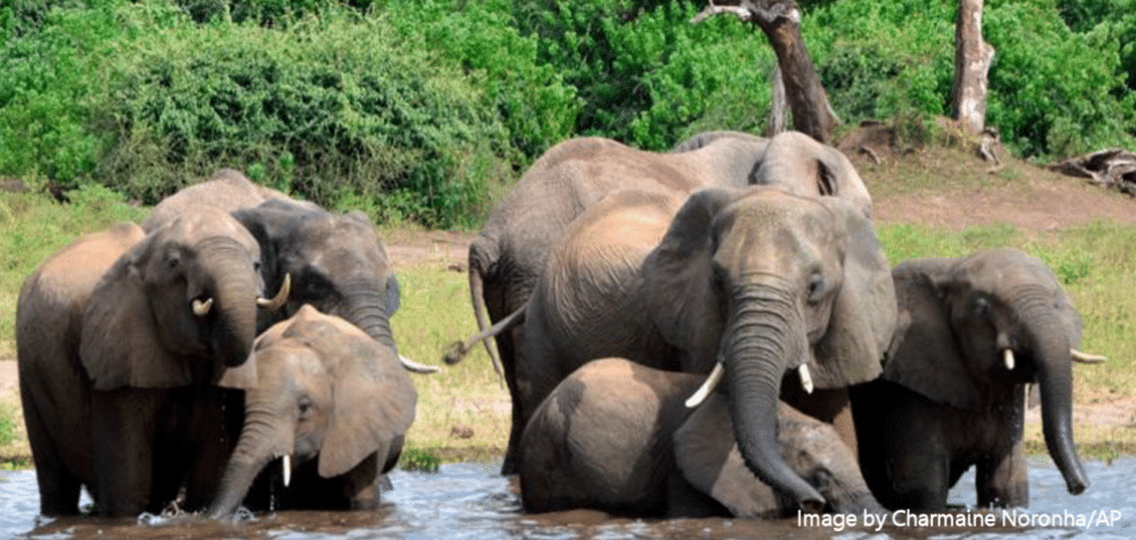 Botswana's elephants: myths vs facts 8