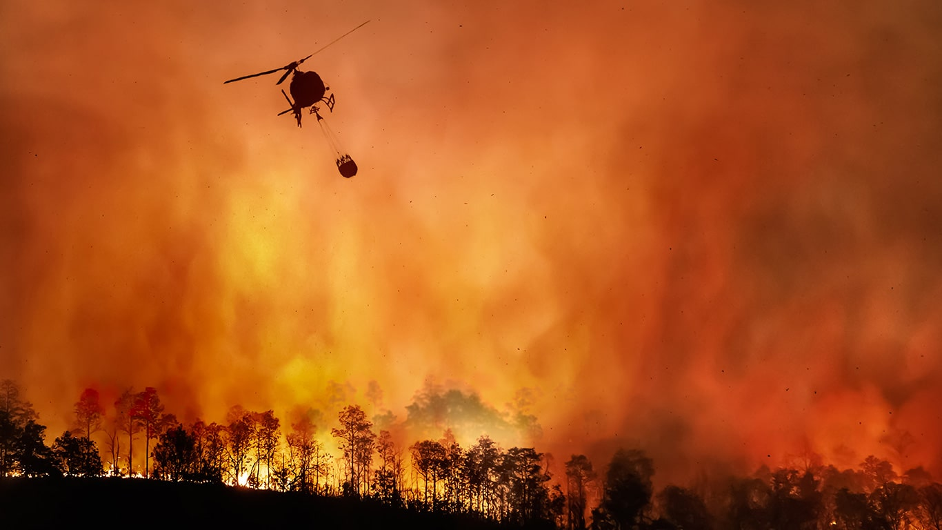 UNPRECEDENTED West Coast FIRES CONTINUE TO RAGE!Animals in MORTAL DANGER! 4