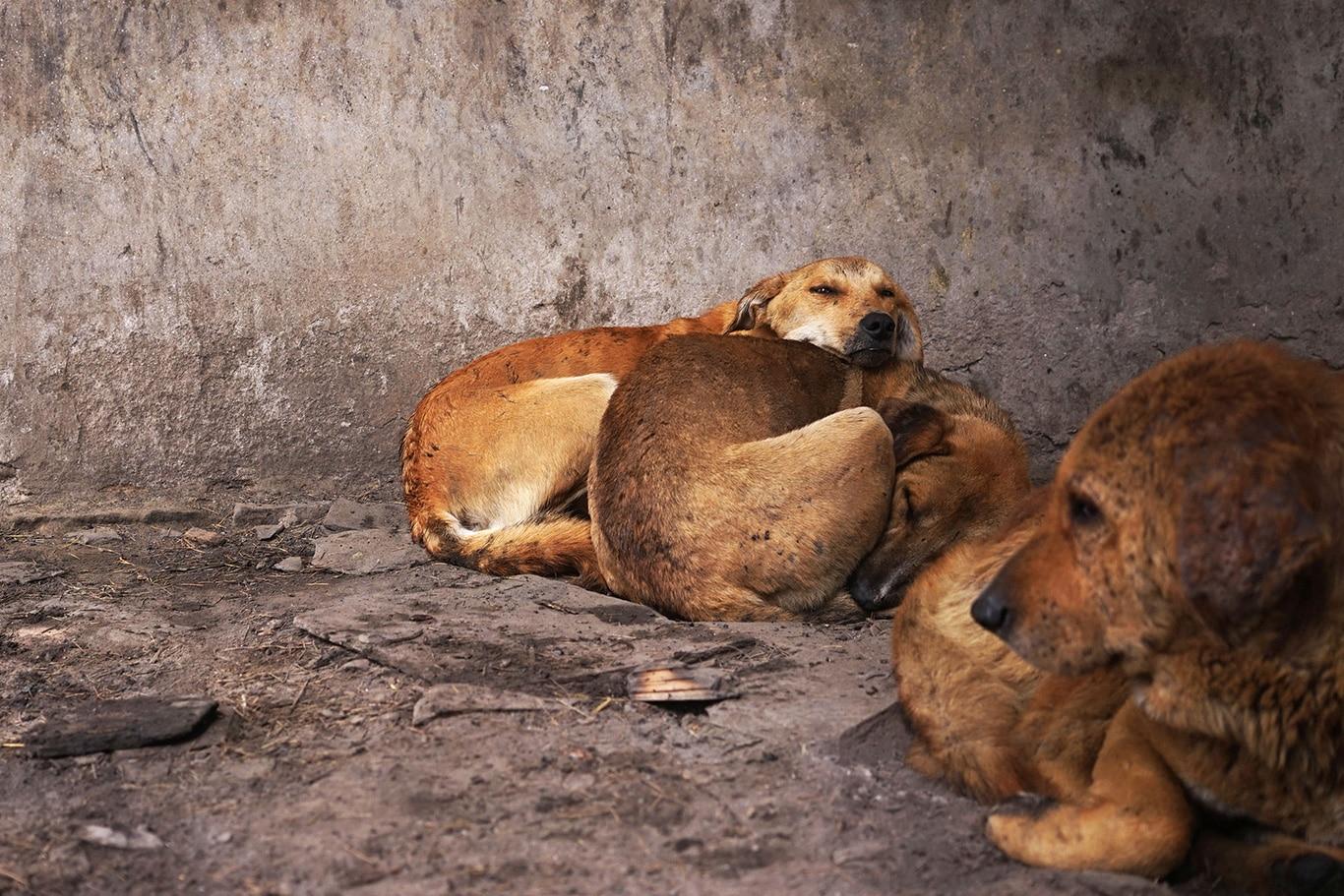 Cassandra and her six defenseless puppies DESPERATELY need help! 1