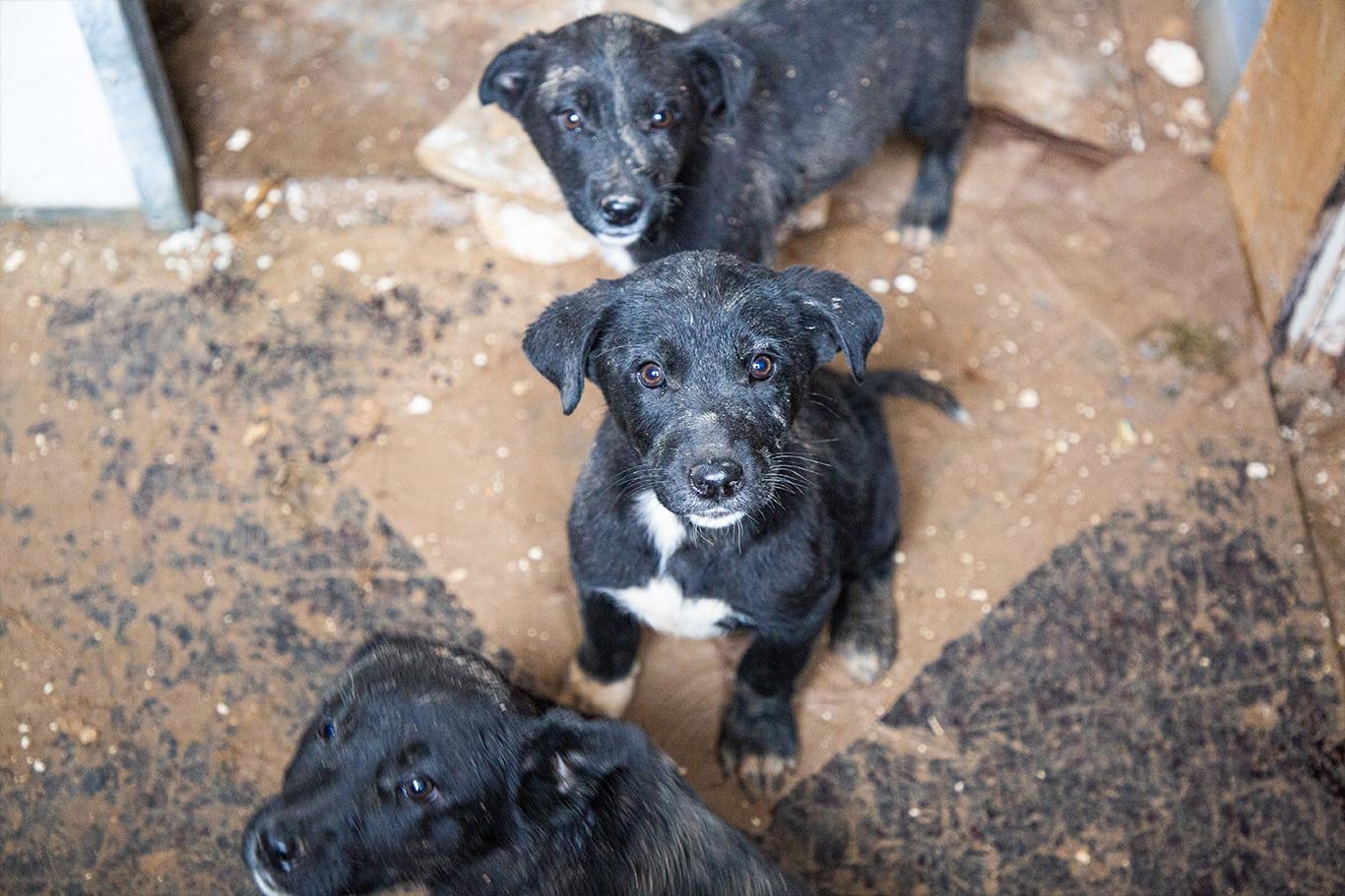 Cassandra and her six defenseless puppies DESPERATELY need help! 3