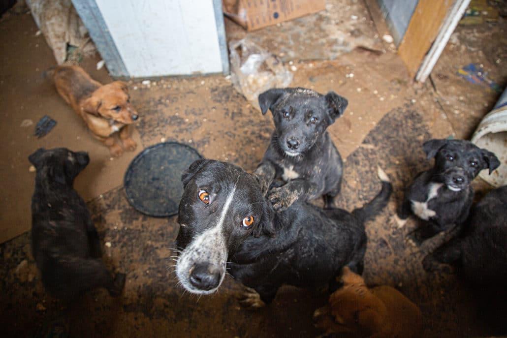 Cassandra and her six defenseless puppies DESPERATELY need help! 14
