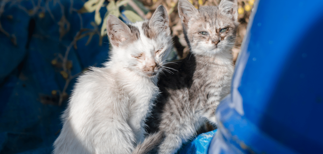 Cats in survival mode on idyllic Greek islands 3