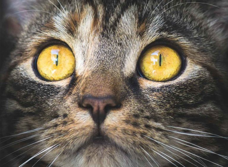 Controversial Ruling In Dubai Could See Thousands Of Stray Cats – And Unregistered Companion Felines - Killed