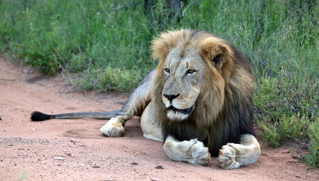 Trophy hunting: the dark side of conservation. 6