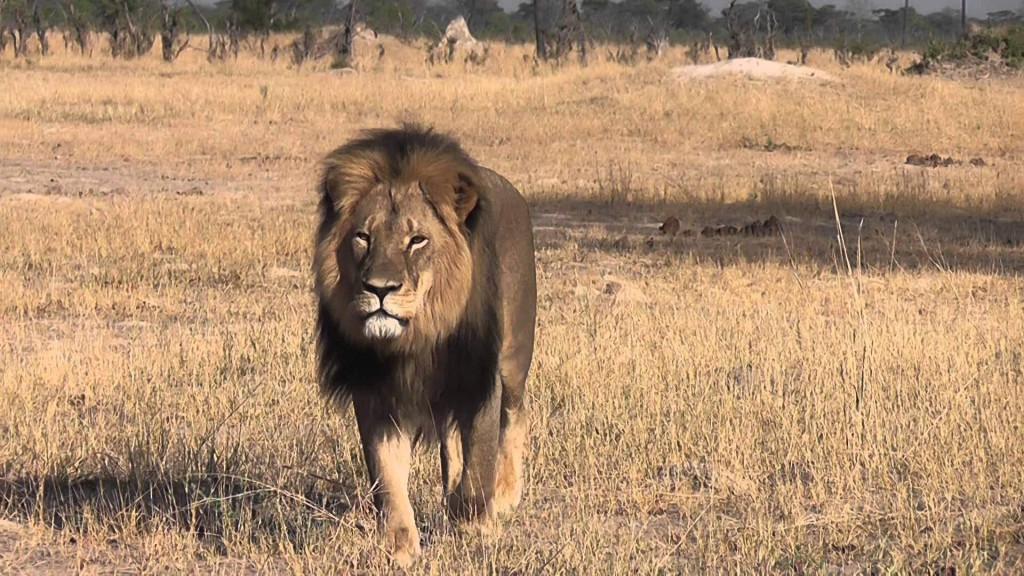 Cecil the Lion: Compassion for the Dollar 5