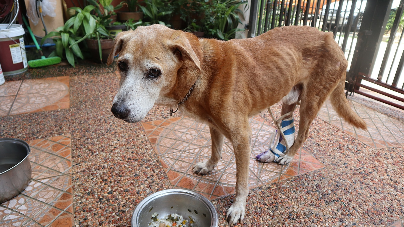 Hit by a car and STARVING! Please help! 1