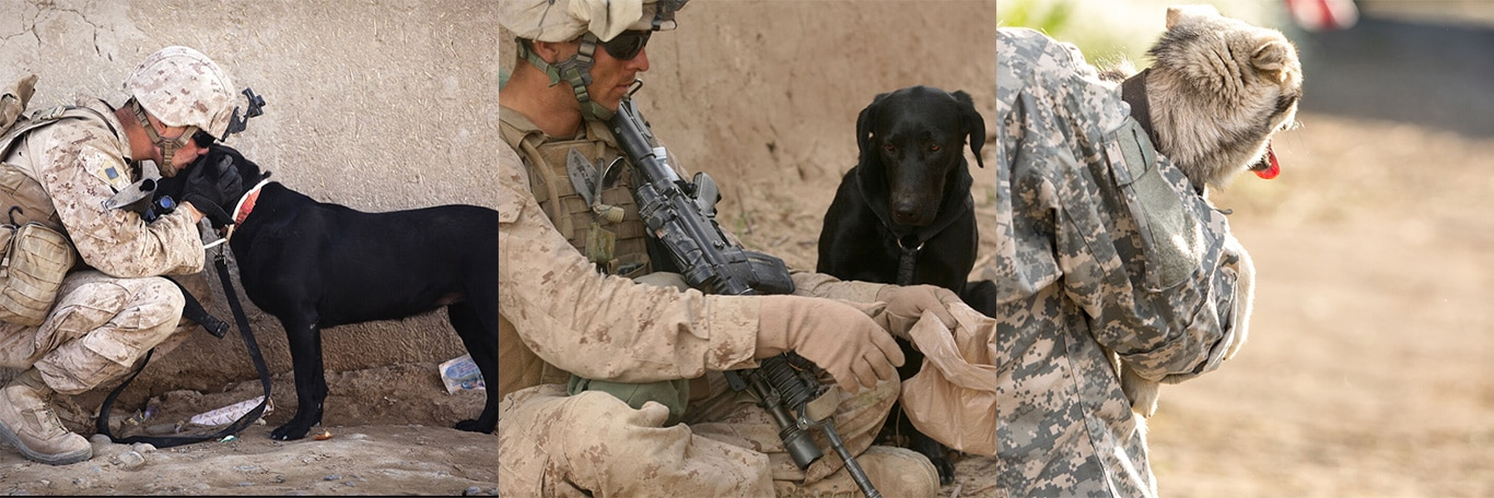 Dogs who help PTSD traumatized soldiers, face death! 1