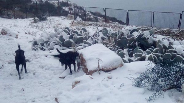 Urgent Update: Humiliated Dubrovnik Mayor Leaves Dogs In Cold 8