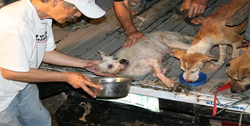 Dog Meat Traders Prosecuted 2