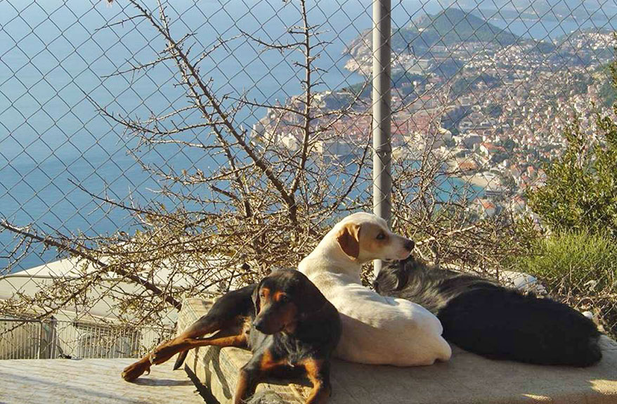 Potential Site for New Animal Shelter Visited by Mayor of Dubrovnik 6
