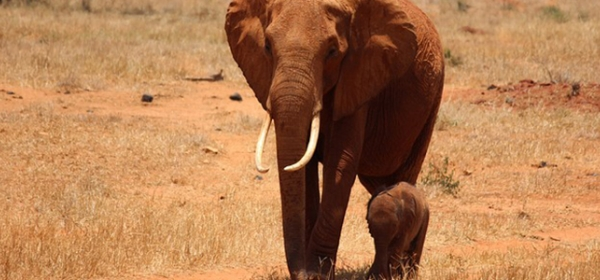 United Elephant Appeal to Chinese President 1