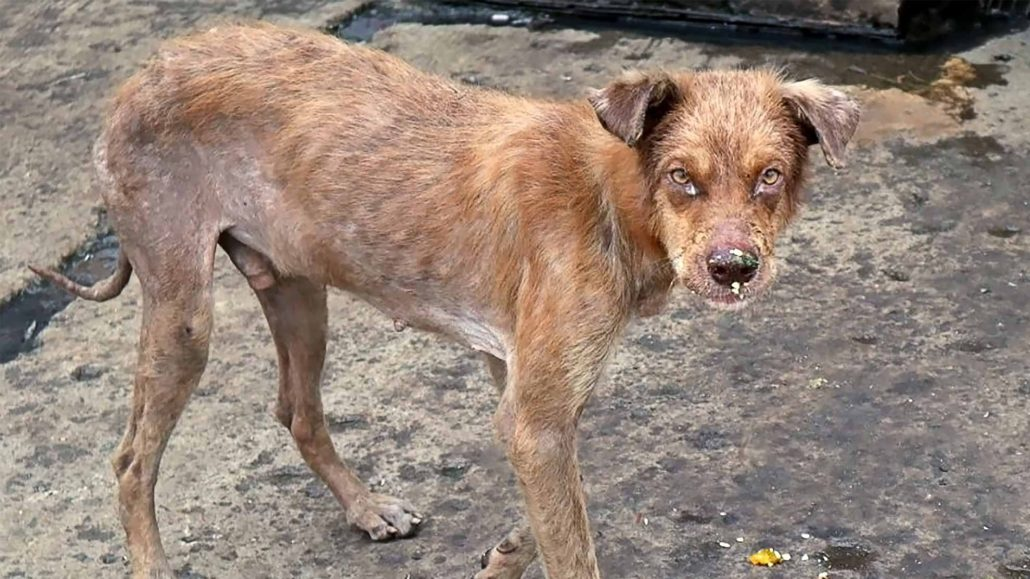 Appeal-phillipines-stray-main-fi-2