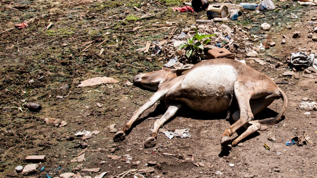 kenya donkeys starving