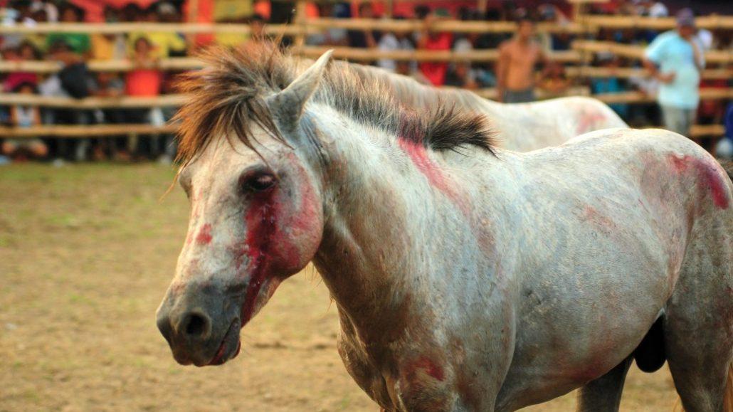 Organized Horse Fighting