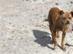 KZN-Valley-Dogs-Emergency-WEBPAGE BANNER