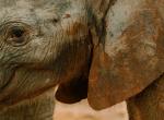 Zimbabwe-Baby-Elephant