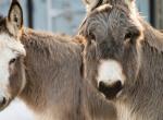 donkeys-NFA