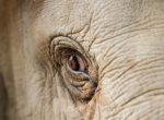 elephant-2-web
