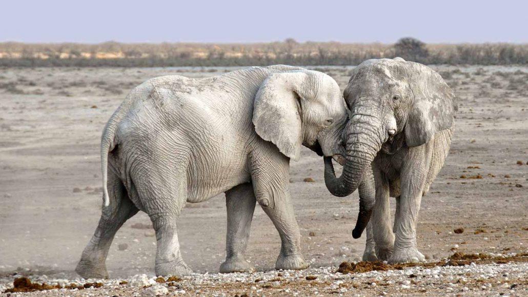 elephant-post-web