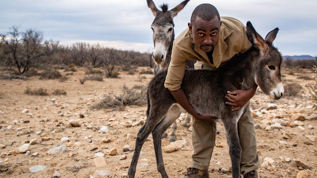 karoo-donkey-insert3